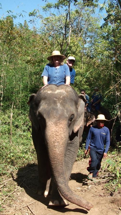 Baanchang_elephants_25th_january_2012_072